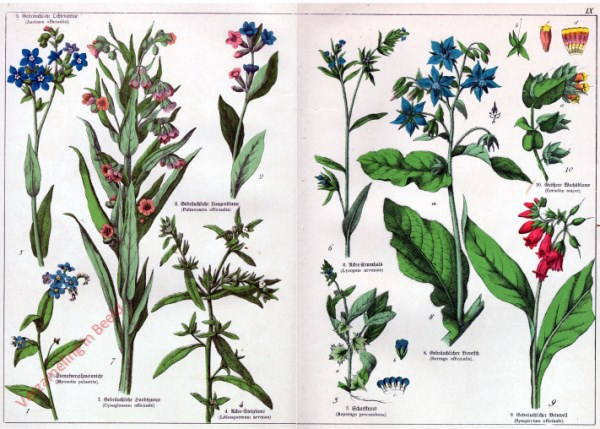 IX - [Diverse planten]