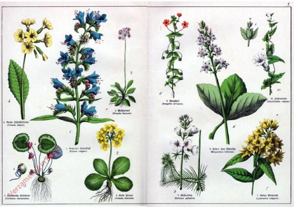 X - [Diverse planten]