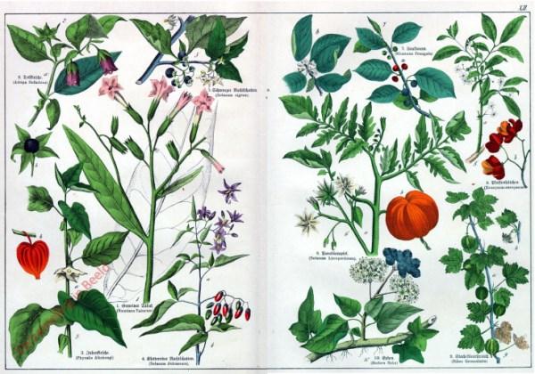 XII - [Diverse planten]