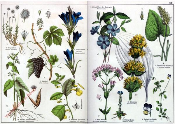 XIII - [Diverse planten]