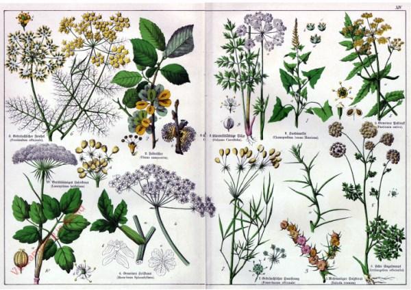 XIV - [Diverse planten]