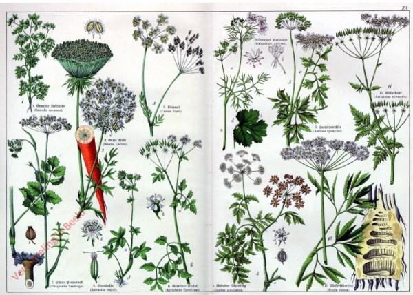 XV - [Diverse planten]