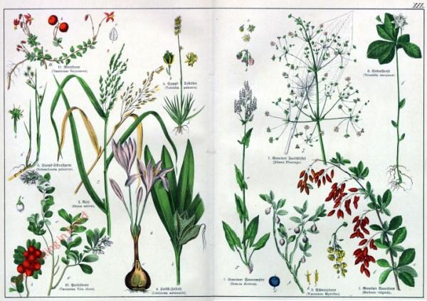 XIX - [Diverse planten]