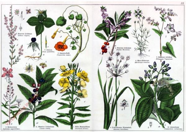 XX - [Diverse planten]