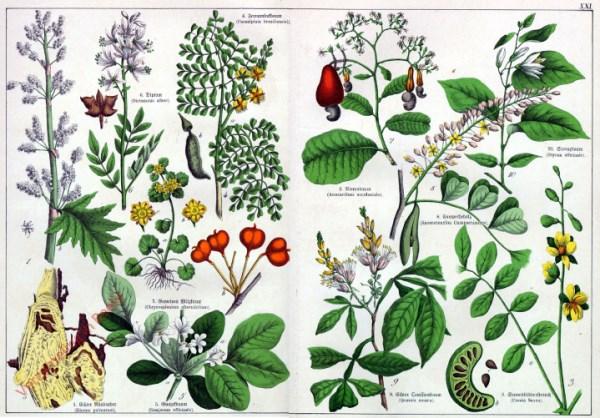 XXI - [Diverse planten]