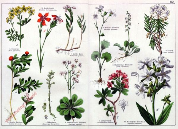 XXII - [Diverse planten]