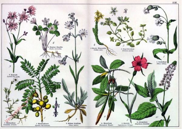 XXIII - [Diverse planten]