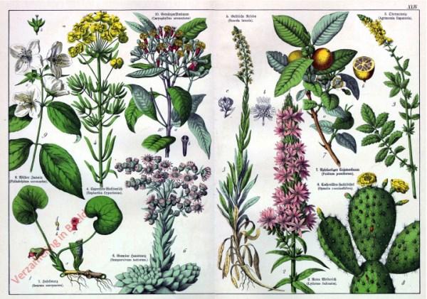 XXIV - [Diverse planten]
