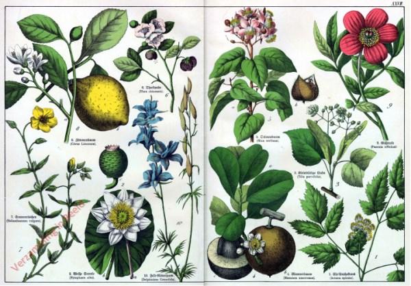 XXVII - [Diverse planten]