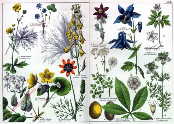 XXVIII - [Diverse planten]