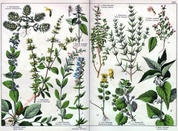 XXX - [Diverse planten]