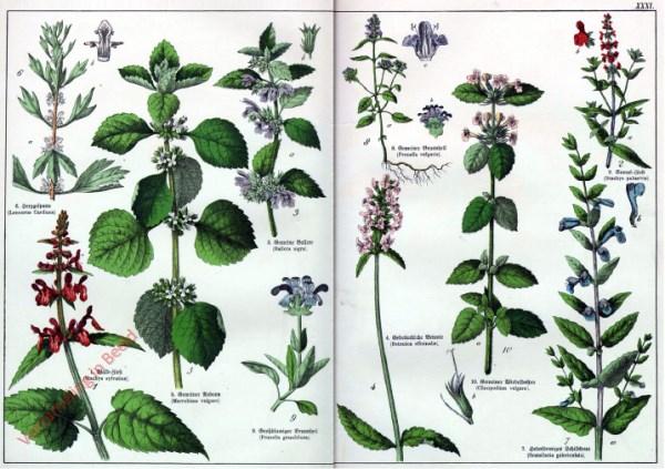 XXXI - [Diverse planten]