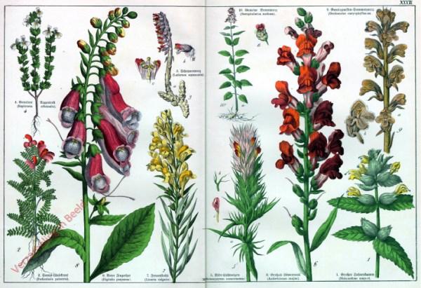 XXXII - [Diverse planten]