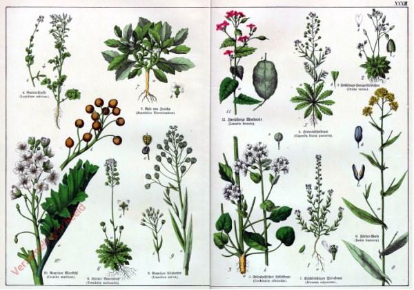XXXIII - [Diverse planten]