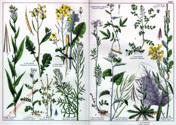 XXXIV - [Diverse planten]