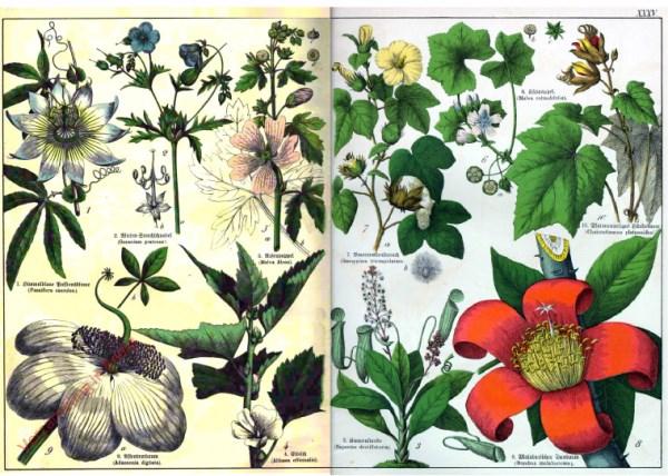 XXXV - [Diverse planten]