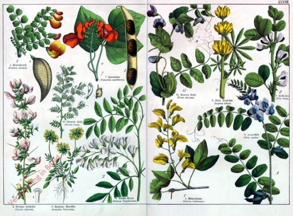 XXXVII - [Diverse planten]