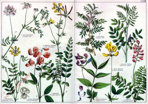 XXXVIII - [Diverse planten]
