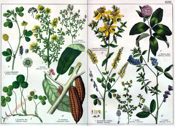 XXXIX - [Diverse planten]