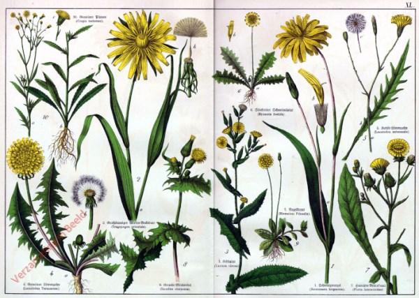 XL - [Diverse planten]