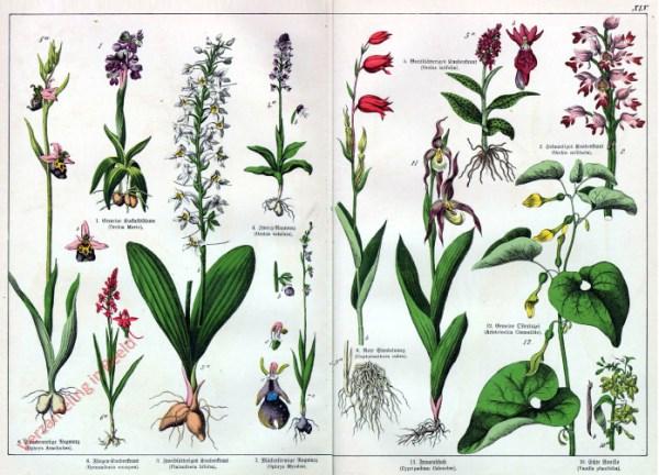 Tipi di fiori elenco verzameling in beeld serie dr g h for Piante da balcone tutto l anno