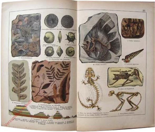XIV - [Fossielen]