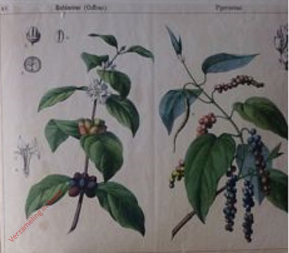 XV, XVI - [Diverse planten]
