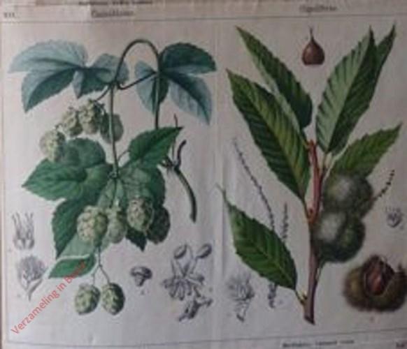 XIX, XX - [Diverse planten]