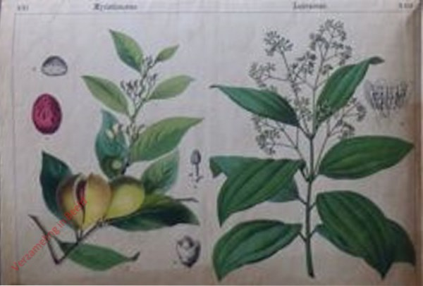 XXI, XXII - [Diverse planten]