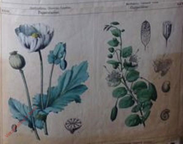 XXIII, XXIV - [Diverse planten]