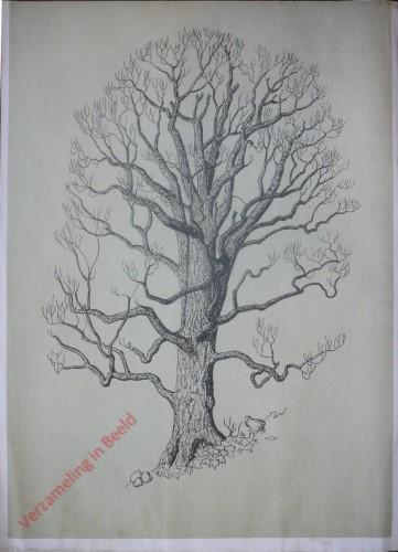 [Esdoorn boomvorm]