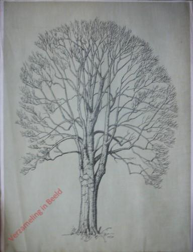 [Beuk boomvorm]