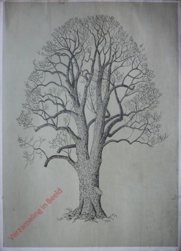 [Linde boomvorm]