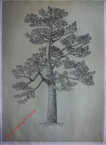 [Den boomvorm]