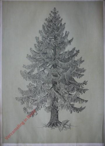 [Spar boomvorm]