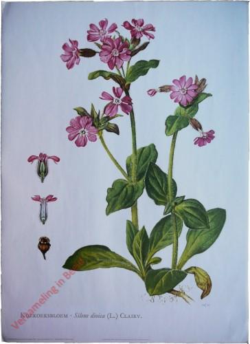 4 - Koekoeksbloem [Voorhoeve versie]