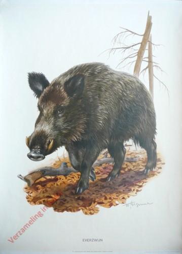 4 - Wild Varken