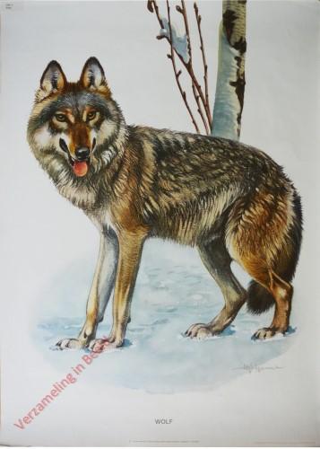 5 - Wolf