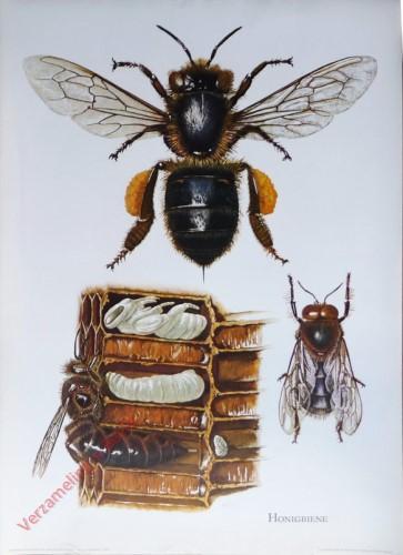 5 - Honigbiene