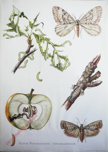 8 - Kleine wintervlinder & Appelbladroller