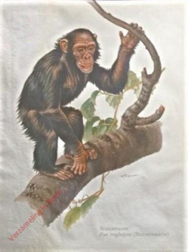 2 - Schimpanse