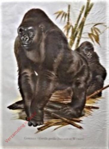 3 - Gorilla