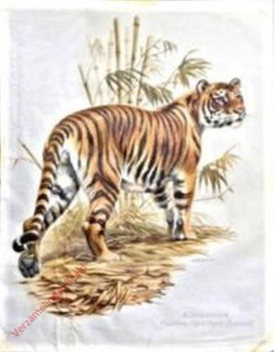 8 - Tiger