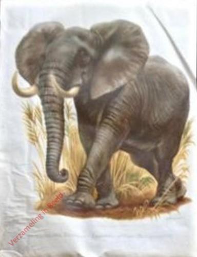 1 - Afrikanischer Elefant
