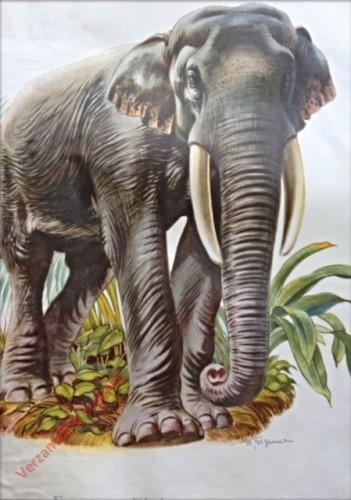 2 - Indischer Elefant