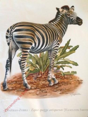 3 - Chapman-Zebra