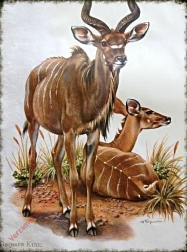 9 - Grosser Kudu