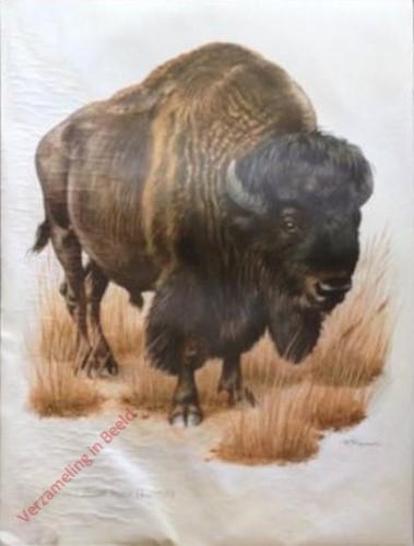 10 - Bison