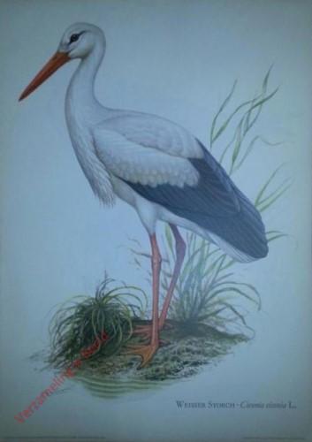 9 - Weisser Storch