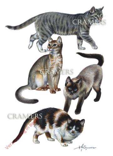 4 - Kat - Hauskatze